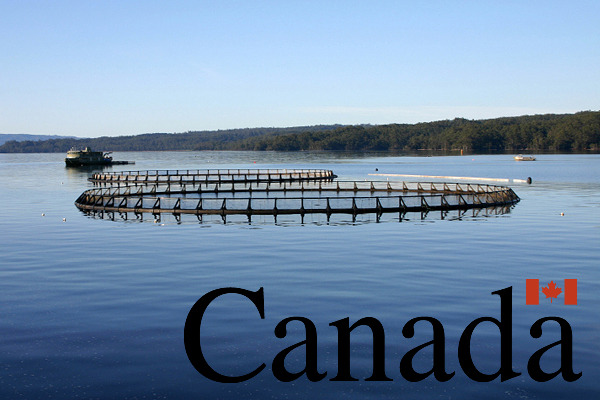 recentnews-canadafunding
