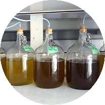 product-algae-concentrate